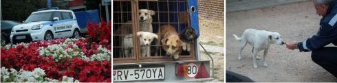 odchyt túlavých psov